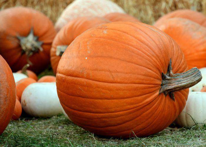 Pumpkin A Super Healthy Fall Food