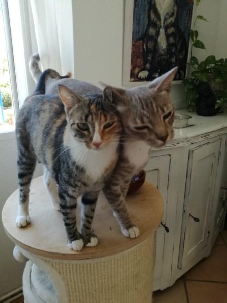 Coco und Chanelle