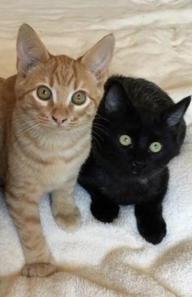 Benji und Blacky