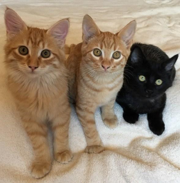 Bailey,Benji und Blacky