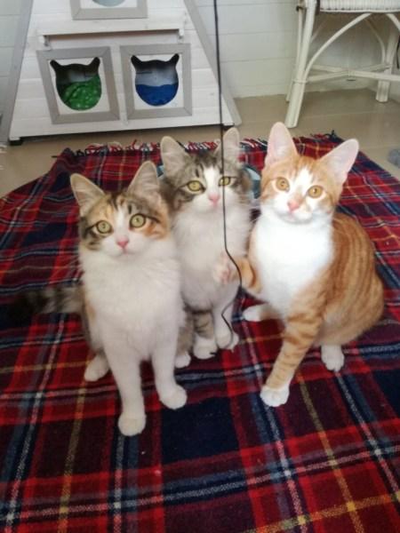 Doro, Dalia und Diego