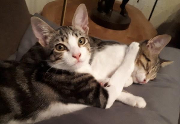Hetty & Juliette