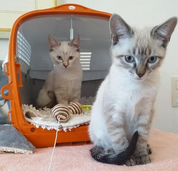 Puki und Piko