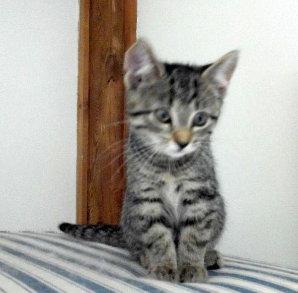 Tita mit Kitten