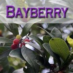 Bayberry Candle Spell