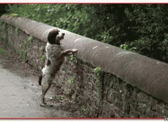 Собаки в этом мистическом месте мира сами сбрасываются с высокого моста Овертоун, что бы разбиться.