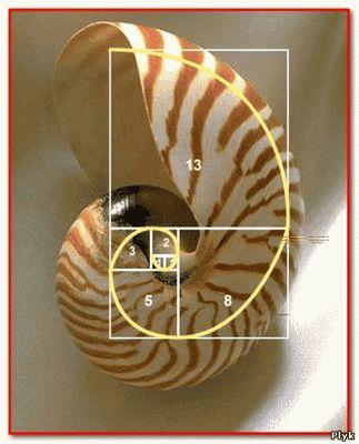 Спираль - живое воплощение последовательности Фибоначчи - божественная пропориция