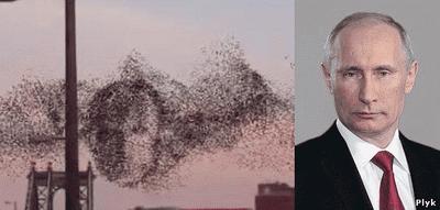 Образ Путина из птиц, видео