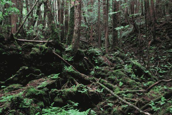 Аокигахара лес проклятых