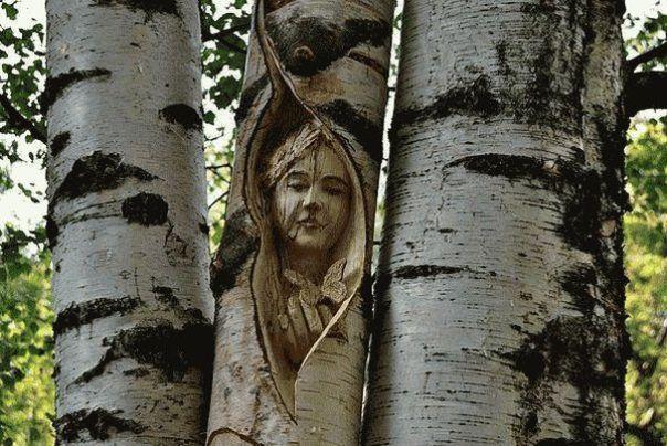 Мистические свойства дерева береза