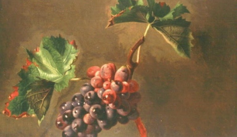 Hrozen vína s větévkou