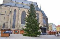 strom na náměstí