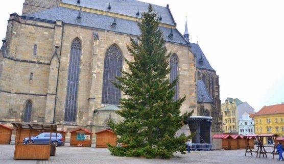 vánoční strom vplzni