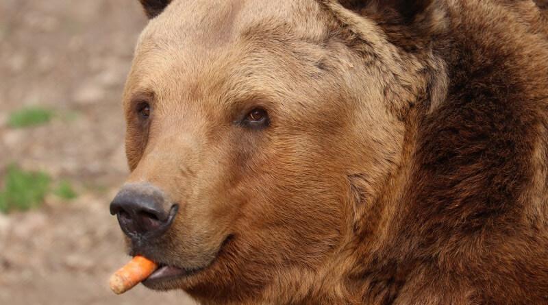 medvěd v zoo