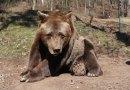 Odešel Pišta, nejdéle chovaný savec vplzeňské zoo
