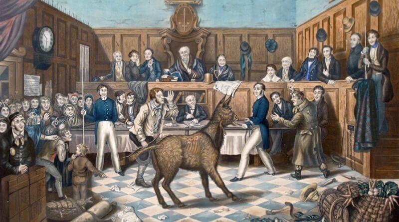 zvíře u soudu