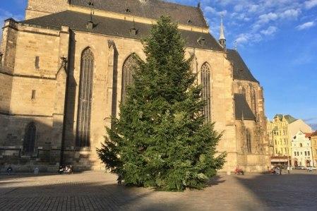 vánoční strom 2020