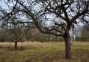 Poznáváme Plzeň: Zapomenutá zahrada jako ostrov divočiny uprostřed města