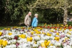 Květiny v sadovém okruhu