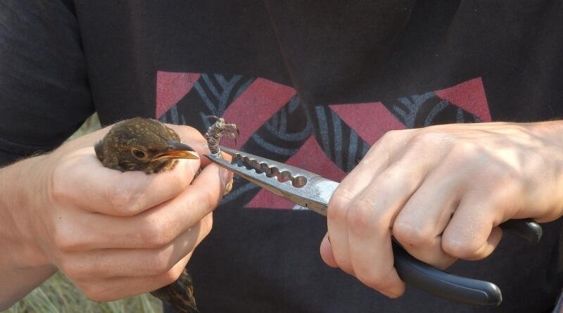 ornitologie