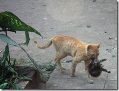 cat-and-kitten21
