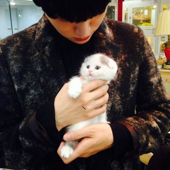 Image result for ahn jae hyun cat