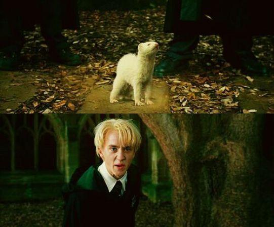 Tareadetransformacion   •Harry Potter• Español Amino
