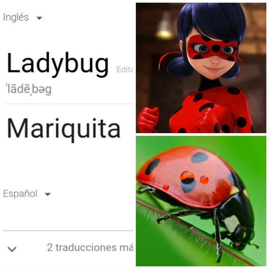 Que Significa En Ingles Ladybug Porsche Car