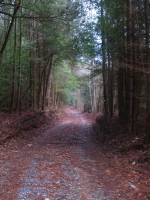 Many old forest roads on the BMT