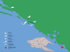 g-izlozba-Glede morske žabeZaboravljeni slučaj 1894-02
