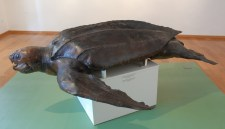 g-izlozba-Glede morske žabeZaboravljeni slučaj 1894-04