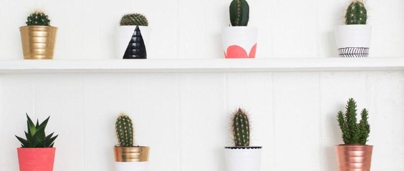 Des cactus sur des étagères