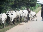 Herdsmen...on duty...