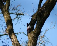 Woodpecker in a small patch of forest near the children's farm