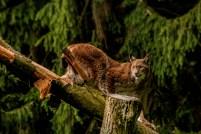 Lynx9_klein