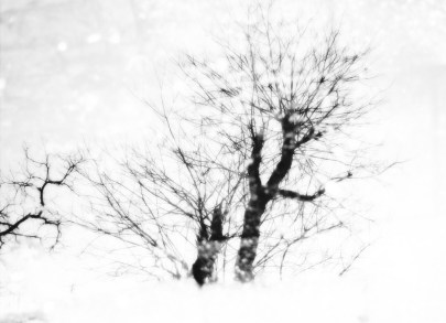 High key edit which gives this image a real winter's look. With a bit of fantasy you can see a snow storm in it - at least i did lol