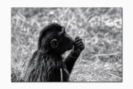 monkey-klein