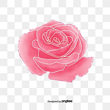 Pink Roses PNG Images Vectors And PSD Files Free