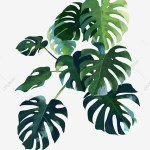 Monstera Png Images Vector And Psd Files Free Download On Pngtree