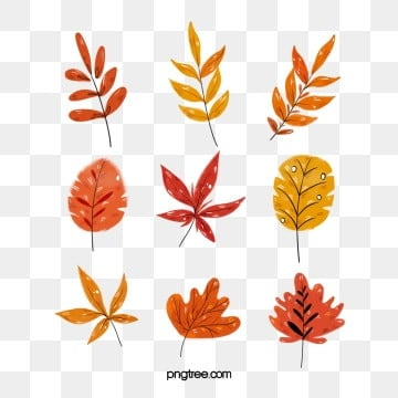 fall leaves png # 17