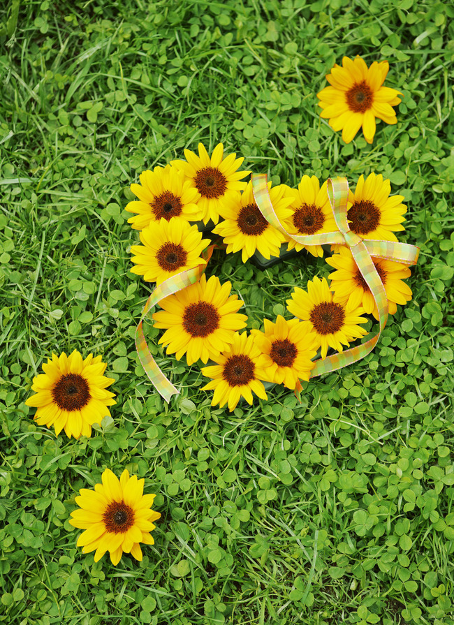 Daisy Backgrounds Images PSD And Vectors Graphic