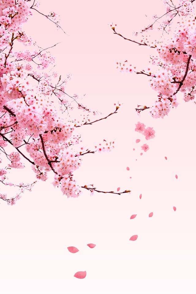 https pngtree com freebackground cherry blossom poster background material 1049254 html
