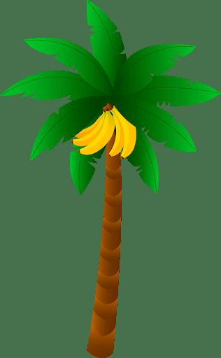 Пальмы PNG фото скачать бесплатно и без регистрации