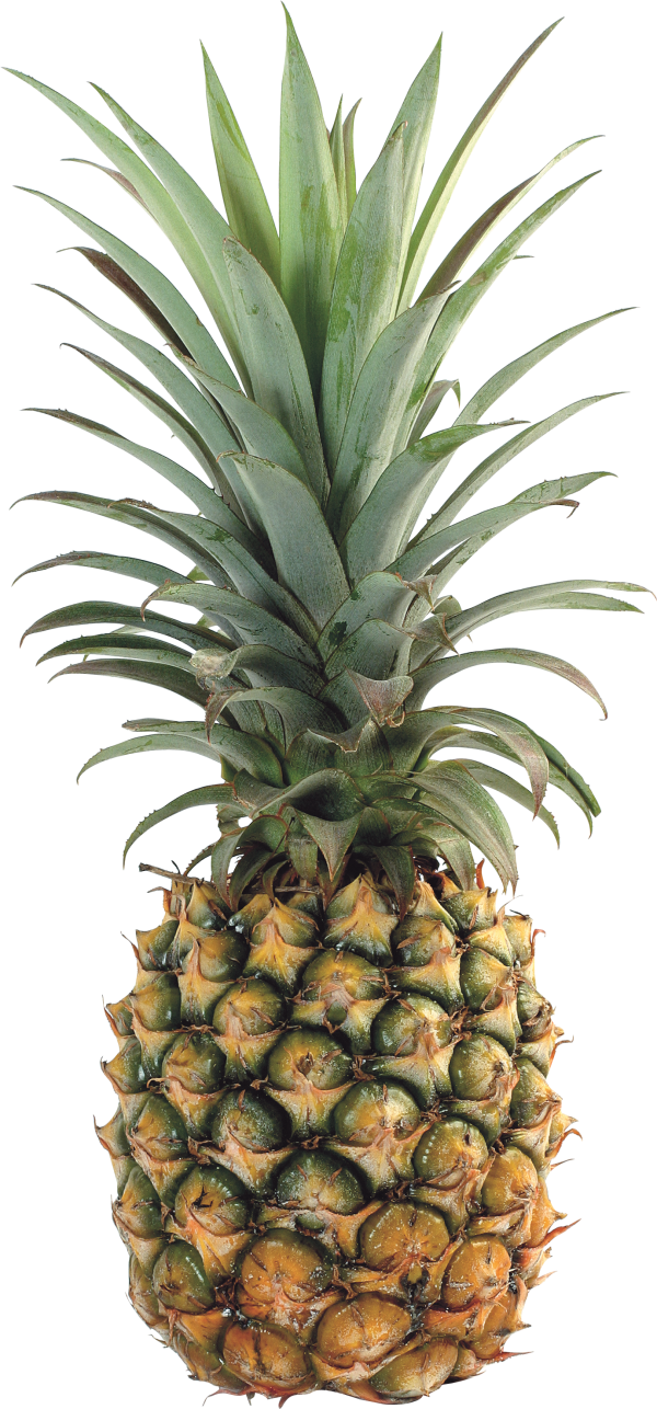 Pineapple PNG image, free download