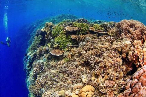 Holiday in PNG -scuba diving