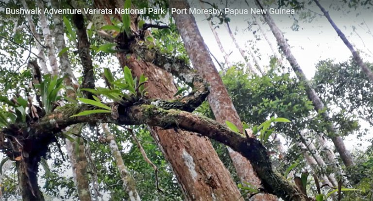 International Forest Day: Why it is important for PNG