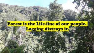 Read more about the article Deforestation Caused by Logging is Worst Kind