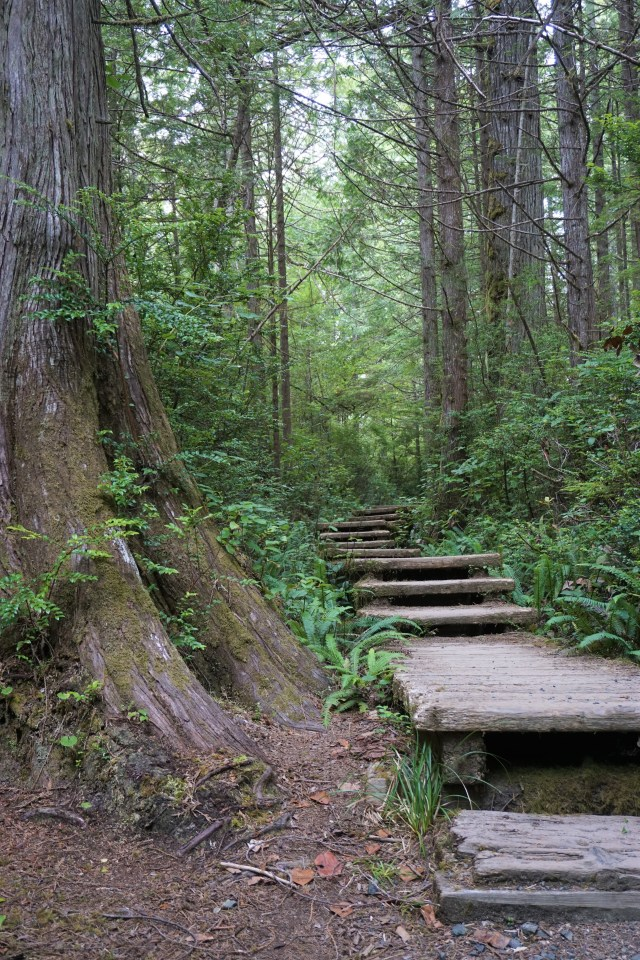 Old Plank Board walk on the Cape Alava trail