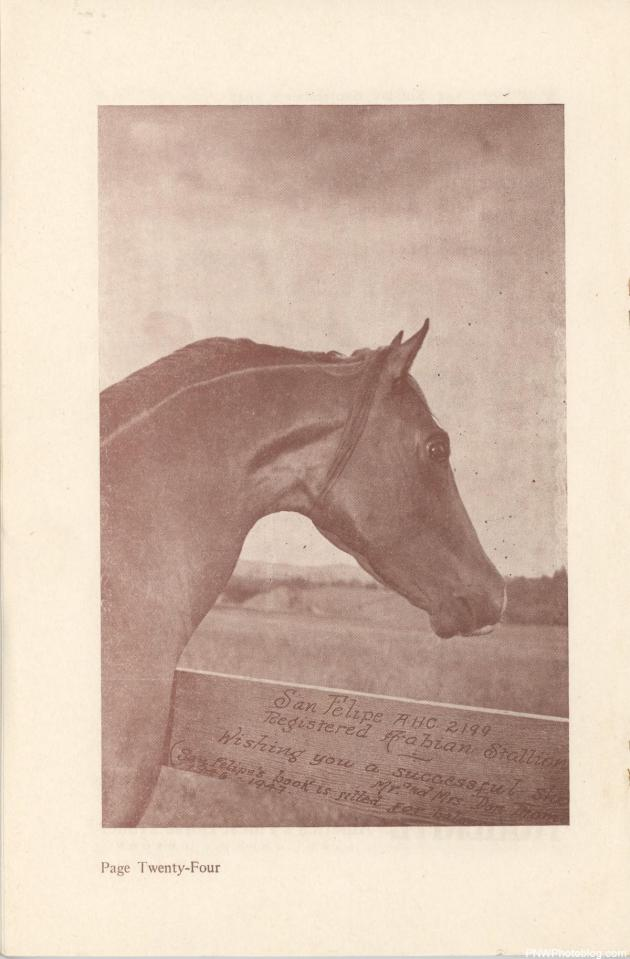 vintage picture of a horse