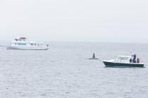 Orcas - 11